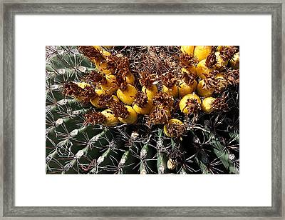 Forbidden Fruit Framed Print by Joe Kozlowski