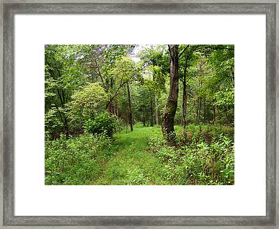 Forest Adventure Framed Print by Pam Clark