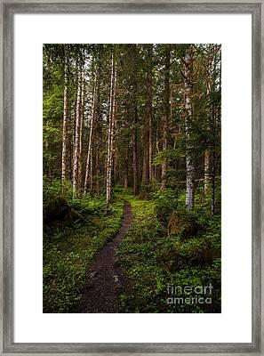 Forest Alder Path Framed Print by Mike Reid