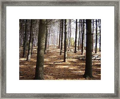 Forest And Trees Framed Print by Gaetano Salerno