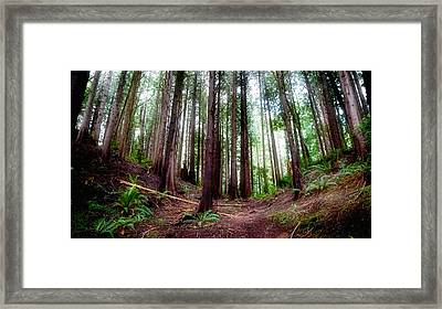 Framed Print featuring the photograph Forest by Adria Trail