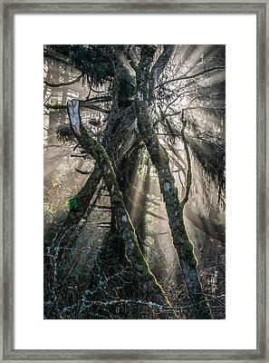 Forest Beams Framed Print by Mike  Walker