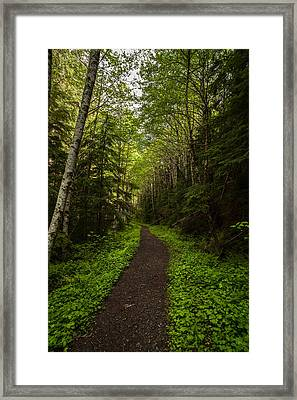 Forest Beckons Framed Print by Mike Reid