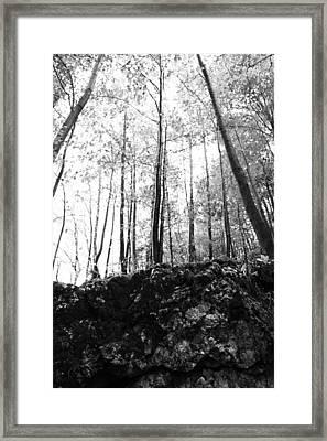Forest Black And White 7 Framed Print by Falko Follert