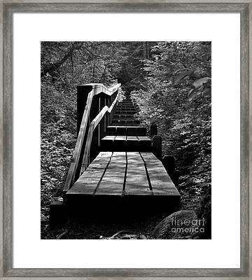 Forest Boardwalk Framed Print