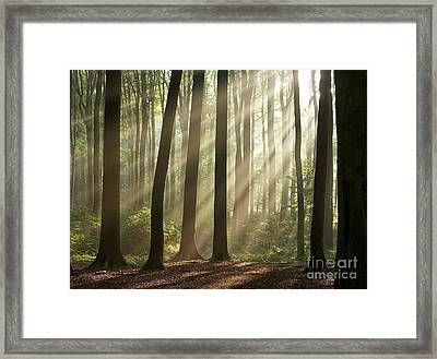 Forest Framed Print by Boon Mee