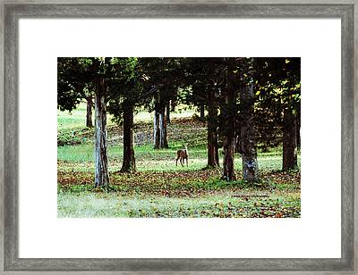 Framed Print featuring the digital art Forest Buck by Lorna Rogers Photography
