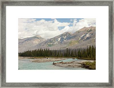 Forest Burnt By Mount Shanks Wild Fire Framed Print by Ashley Cooper