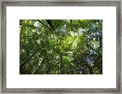 Forest Cathedral Framed Print