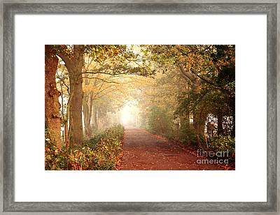 Framed Print featuring the photograph Forest Colors by Boon Mee