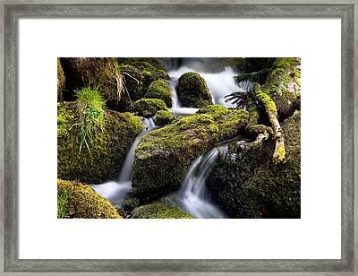 Forest Creek Streaming Between Moss Framed Print by Dirk Ercken