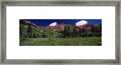 Forest, Crested Butte, Gunnison County Framed Print by Panoramic Images