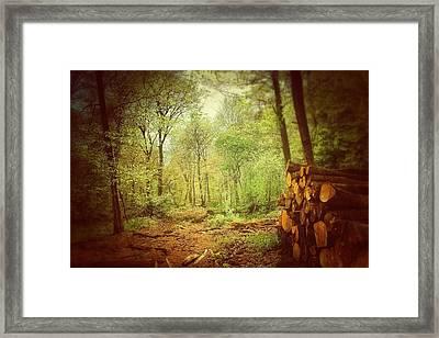 Forest Framed Print by Daniel Precht