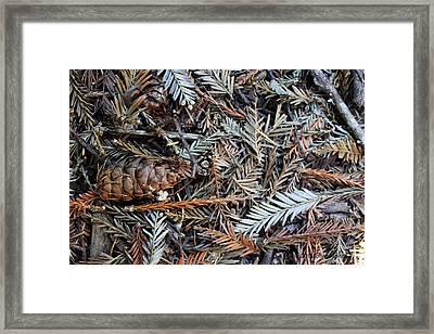 Forest Debris Framed Print by Deana Glenz