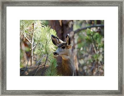 Forest Doe Framed Print
