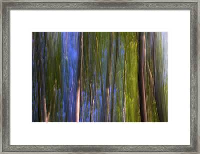 Forest Dreams Framed Print by Guido Montanes Castillo