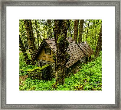 Forest Dwelling - Oregon Rainforest Framed Print by Gary Whitton