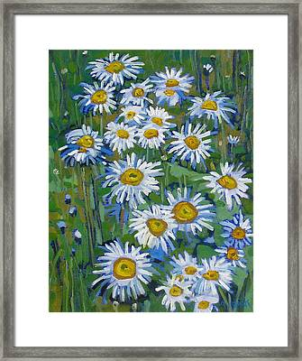 Forest Edge Daisies Framed Print by Phil Chadwick