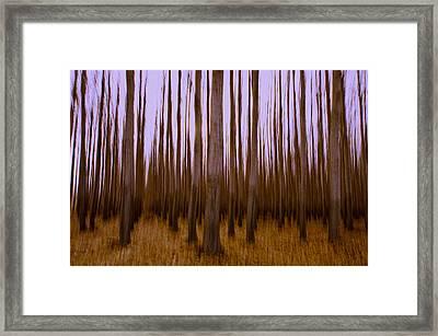 Forest Escape Framed Print