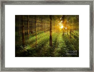 Forest Fairytale Framed Print by Bernadett Pusztai