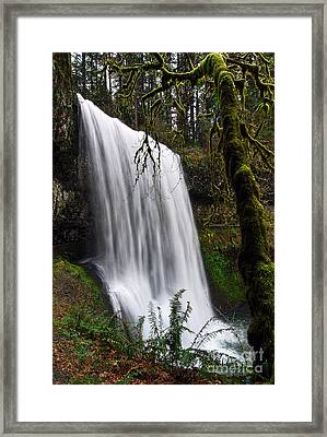 Forest Falls - Waterfall In The Silver Falls State Park In Oregon Framed Print
