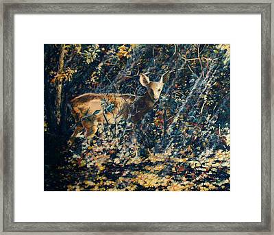 Forest Fawn Framed Print by Dan Terry
