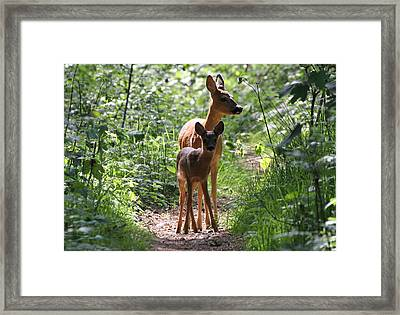 Forest Fawn Framed Print by Ger Bosma