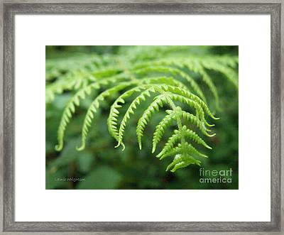 Forest Fern Framed Print by Lainie Wrightson