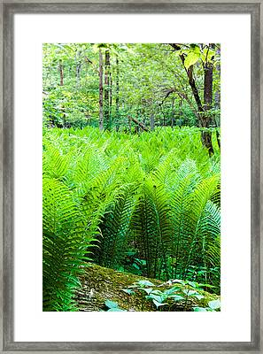 Framed Print featuring the photograph Forest Ferns   by Lars Lentz