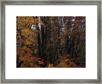 Forest Fineness Framed Print by Jeri lyn Chevalier