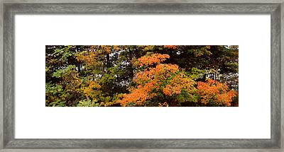 Forest, Finger Lakes, New York State Framed Print by Panoramic Images