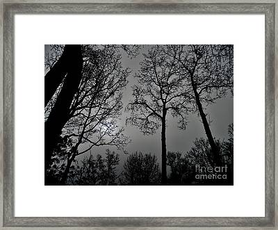 Forest Fingers Framed Print