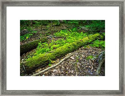 Forest Floor Gosnell Big Woods Framed Print by Tim Buisman