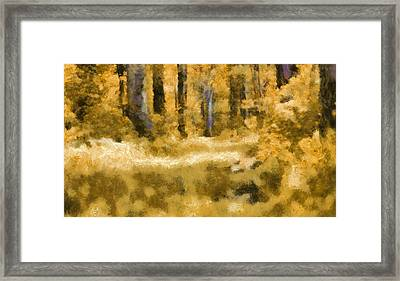 Forest Floor In Autumn Framed Print by Dan Sproul