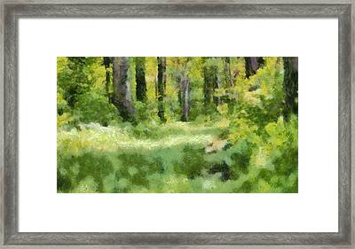 Forest Floor In Summer Framed Print by Dan Sproul