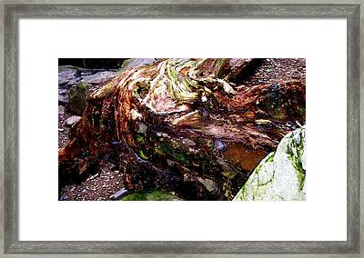 Forest Floor Framed Print