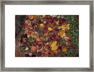 Forest Floor Framed Print by Kathleen Bishop