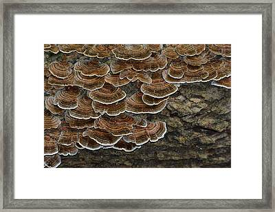 Forest Floor Number 3 Framed Print