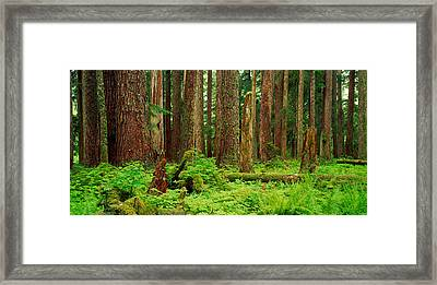 Forest Floor Olympic National Park Wa Framed Print by Panoramic Images