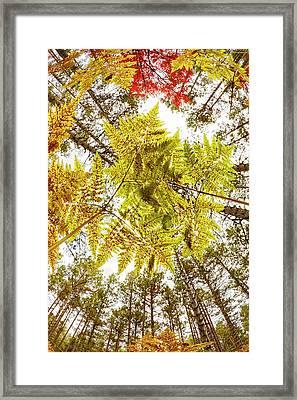 Forest Floor View Skyward Framed Print