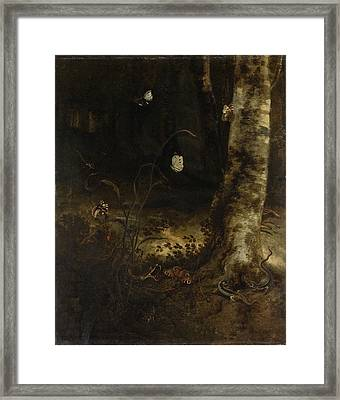 Forest Floor With A Snake, Lizards, Butterflies And Other Framed Print