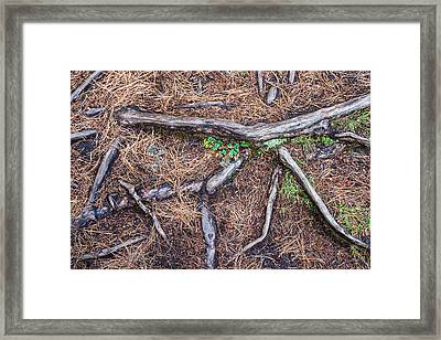 Forest Floor With Tree Roots Framed Print by Matthias Hauser