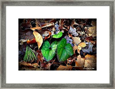 Framed Print featuring the photograph Forest Flora by Tara Potts