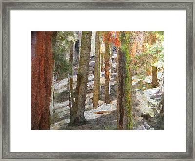 Forest For The Trees Framed Print by Jeff Kolker