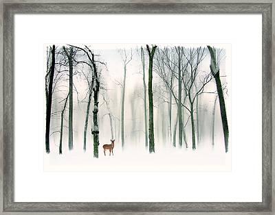 Forest Friend Framed Print