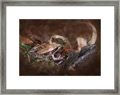 Forest Frog Framed Print by Angie Vogel