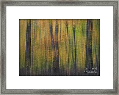 Forest Glow Framed Print by Susan Candelario