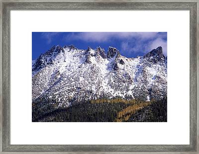 Forest Gold Framed Print