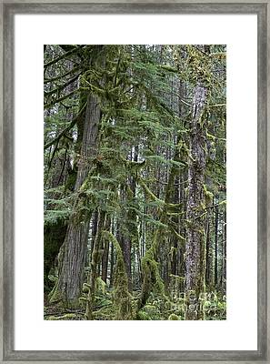 Forest Green  Framed Print by Tim Rice