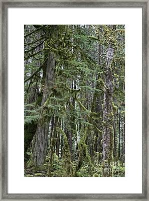 Forest Green  Framed Print